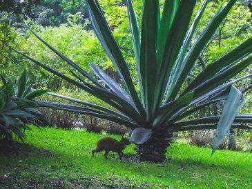 Odwiedziny Kapibary W Monteverde autor: Jacek Brzezowski