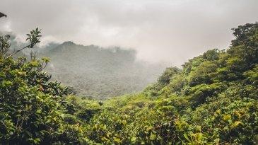 Las Chmurowy Monteverde autor: Jacek Brzezowski