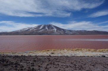 Jezioro Laguna Colorada Boliwia