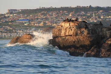 Mossel Bay i Garden Rout