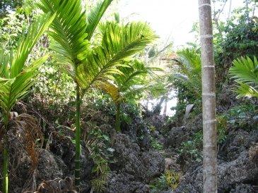 Dżungla .JPG