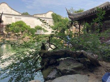 Ogrody Mistrza Sieci Suzhou