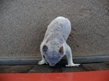 Fraser Island- Australia