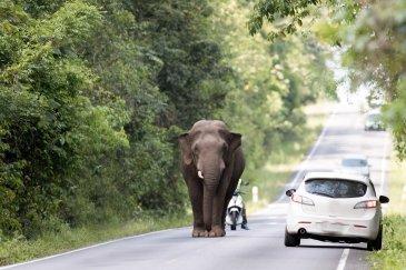 Khao Yai Tajlandia